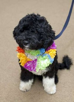 "The White House releases photos of the new ""First Dog"" to be renamed ""Bo"". Sasha and Malia recently met their new Portuguese Water Dog puppy. The puppy is expected to arrive at the White House on Tuesday, April 14, 2009."